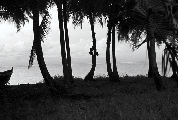 One of the last palm-sap gatherers climbing a tree. Note the wooden footholds attached with rope that made climbing easier. Addu Atoll, 1977.