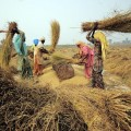Ambitious agenda for food security