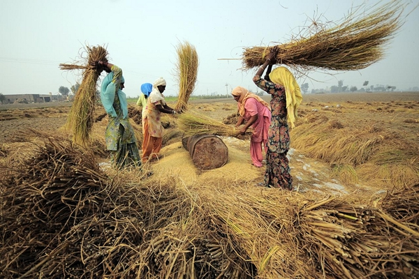 Ambitious Agenda For Food Security Himal Southasian