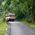 The damned road of Andamans