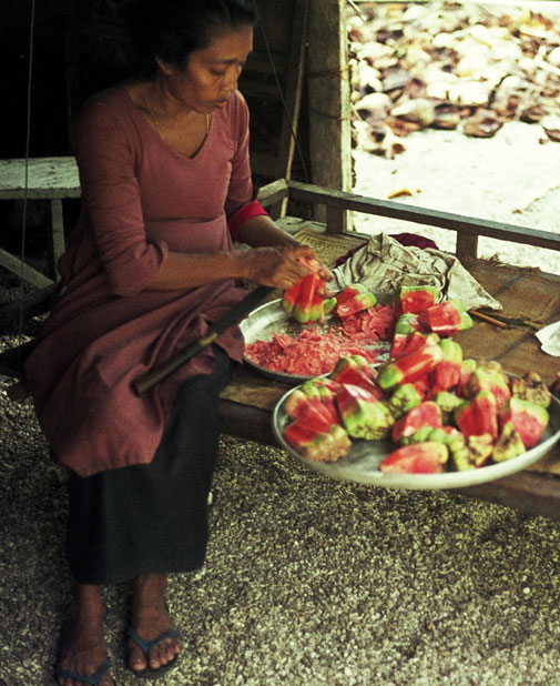 A woman in Dadimago slicing screwpine fruit at home. Fua Mulaku, 1977.