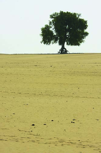 jaisalmer - thar desert - india ; Flickr / nevil zaveri