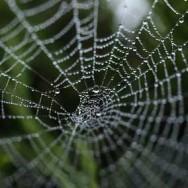 Web of control