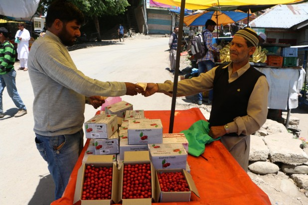 Cherries have a ready market available both inside and outside Kashmir.