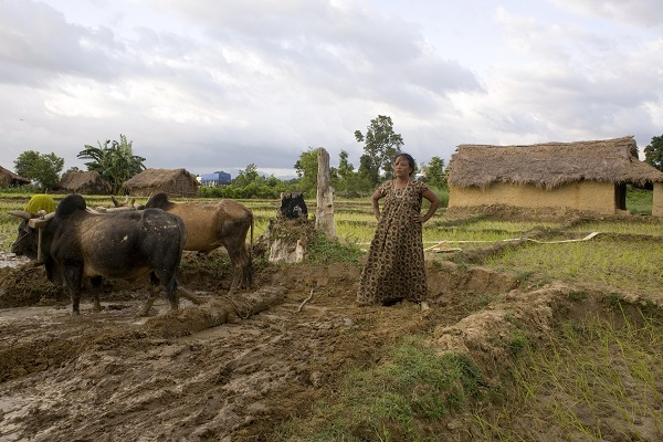 Bardiya, 2009. Landless and homeless Sundari Devi Badi ploughs a little plot outside her shack in a squatter community on government land by the highway. Photo: NayanTara Gurung Kakshapati / Nepal Picture Library